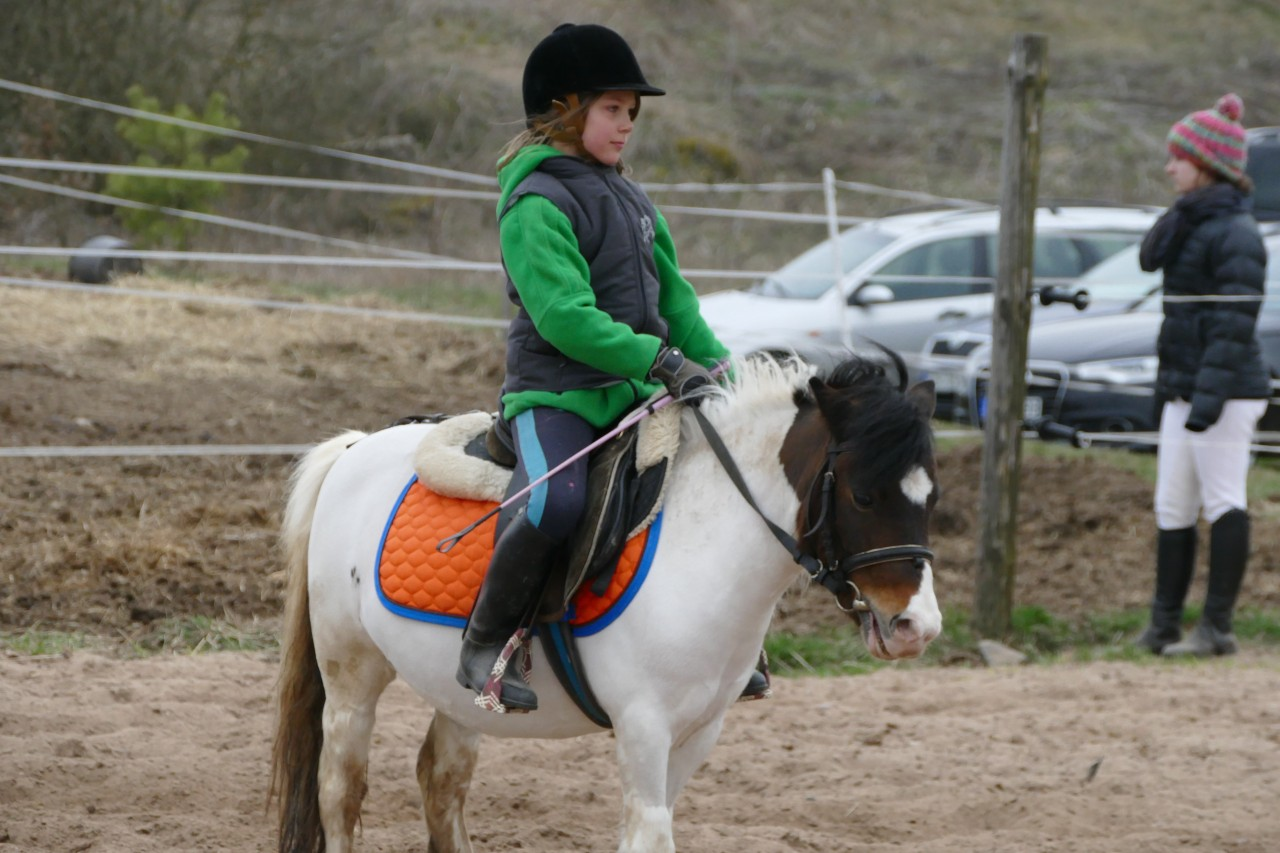 Equus riding school competition